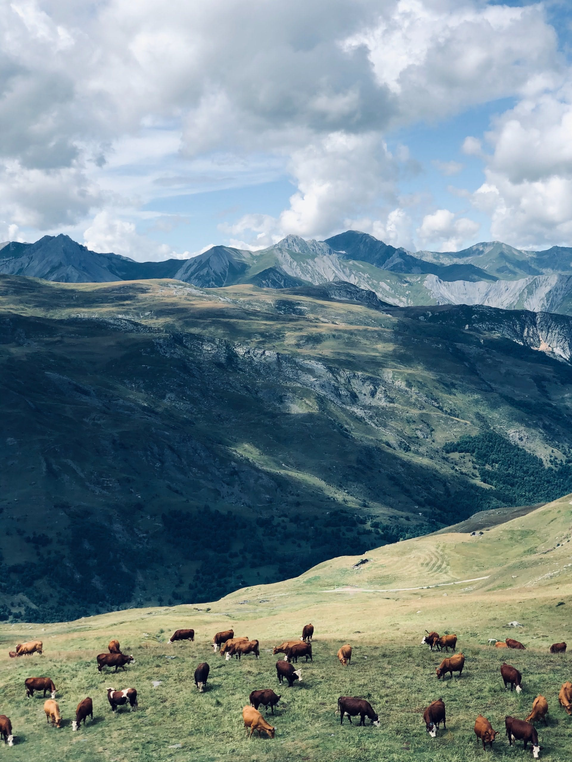 animals in the alps
